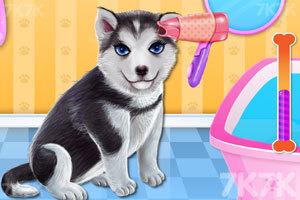 《小狗温泉沙龙》游戏画面3
