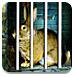 可爱的兔子救援