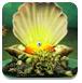 拯救深海美人鱼