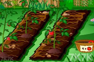 《朱丽叶的花园》游戏画面3
