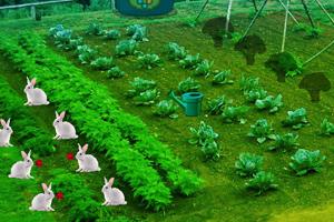 《蔬菜花园逃脱》游戏画面1
