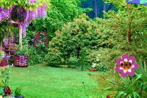 《大植物花园逃脱》游戏画面1