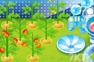 《阿sue番茄工厂》游戏画面3