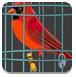 救援红色小鸟