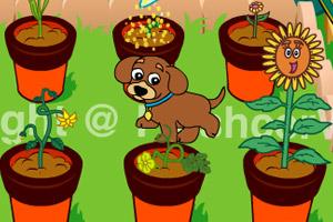 小狗种美丽鲜花